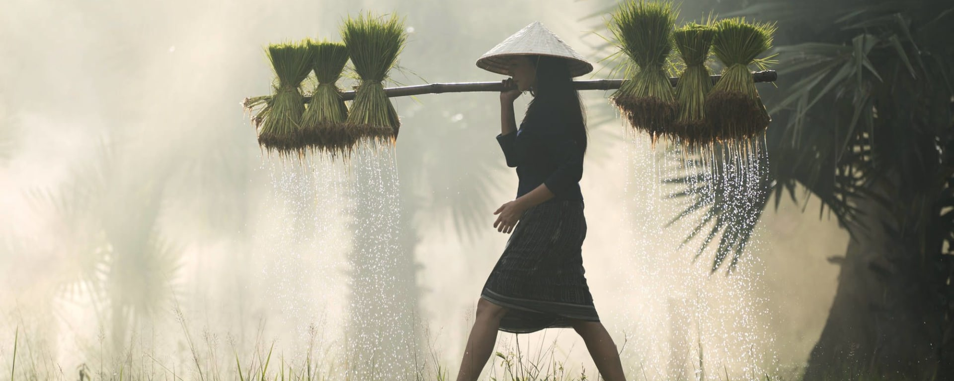 Découverte active du delta du Mékong de Saigon: Female Farmer with rice seedlings