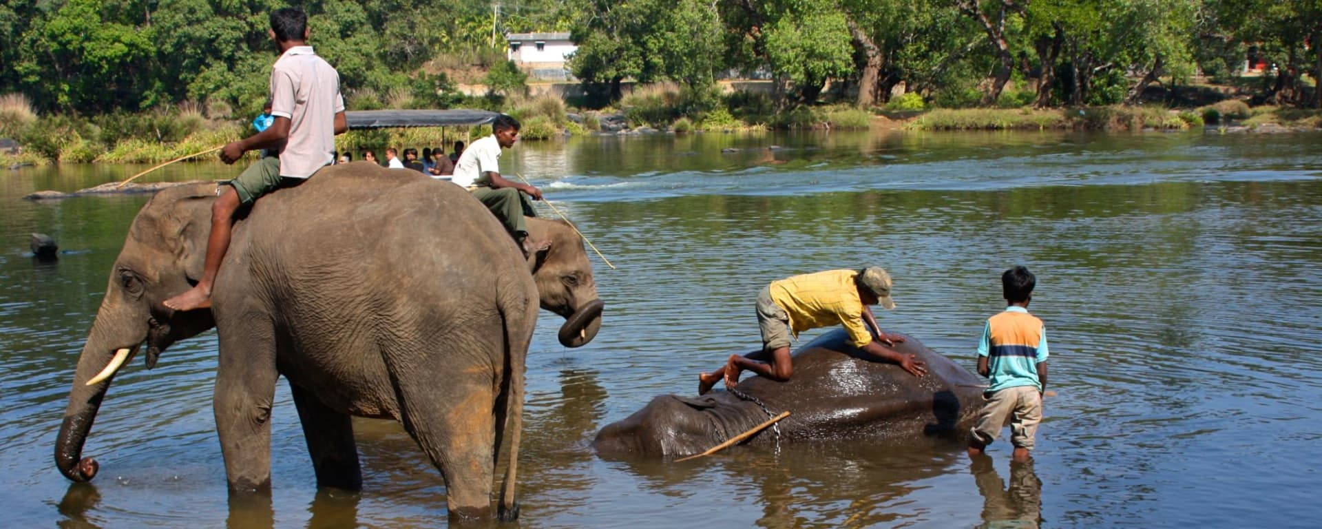 Le sud diversifié de l'Inde de Kochi: Dubare: Elephant Camp