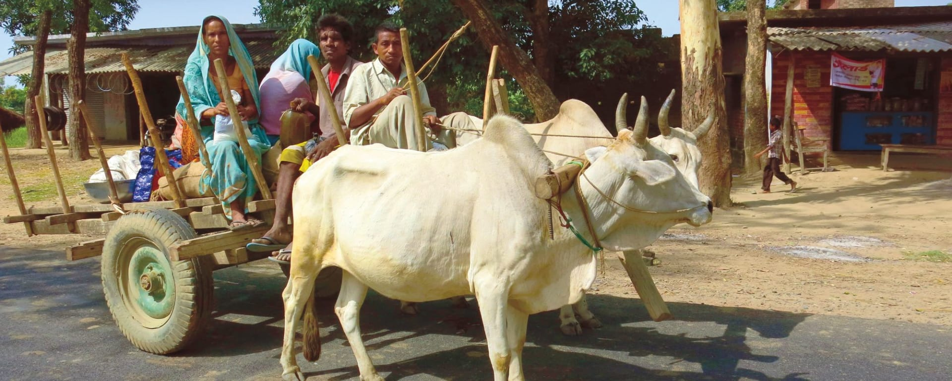 Jaagir Lodge Safari ab Lucknow: Oxcart in Lakhimpur Kheri