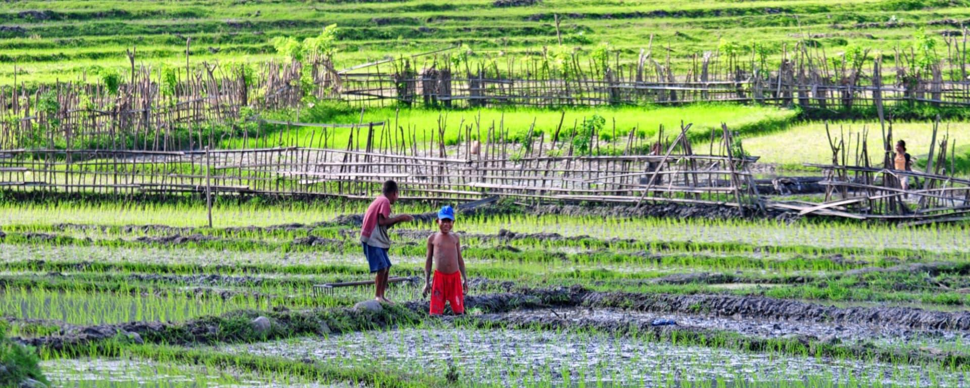 Timor-Leste Reisen und Ferien von tourasia: Rice fields