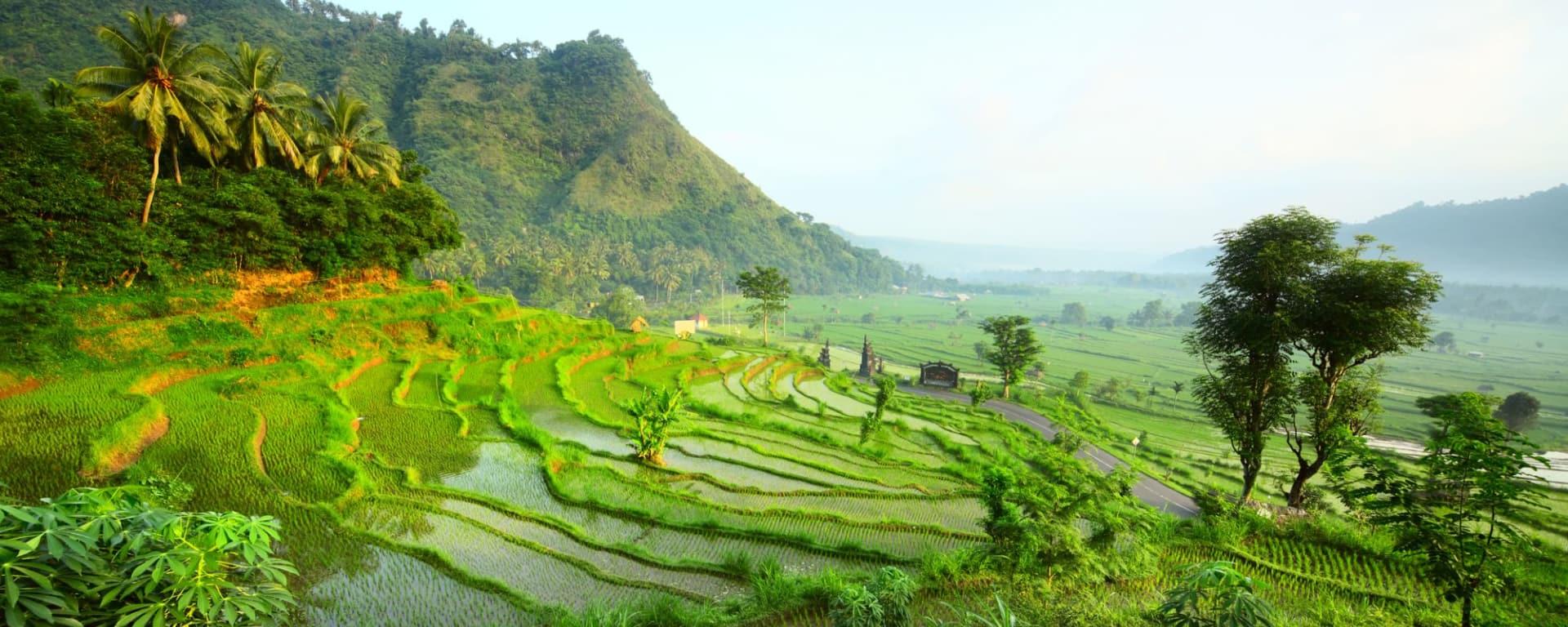 Erlebnisreiches Bali ab Südbali: Bali Rice fields