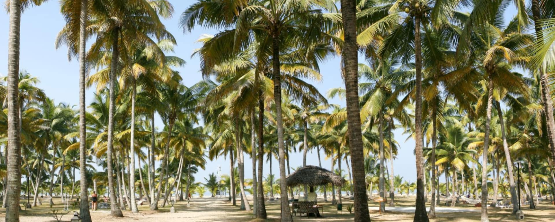 Marari Beach Resort in Mararikulam: Garden Marari Beach Resort