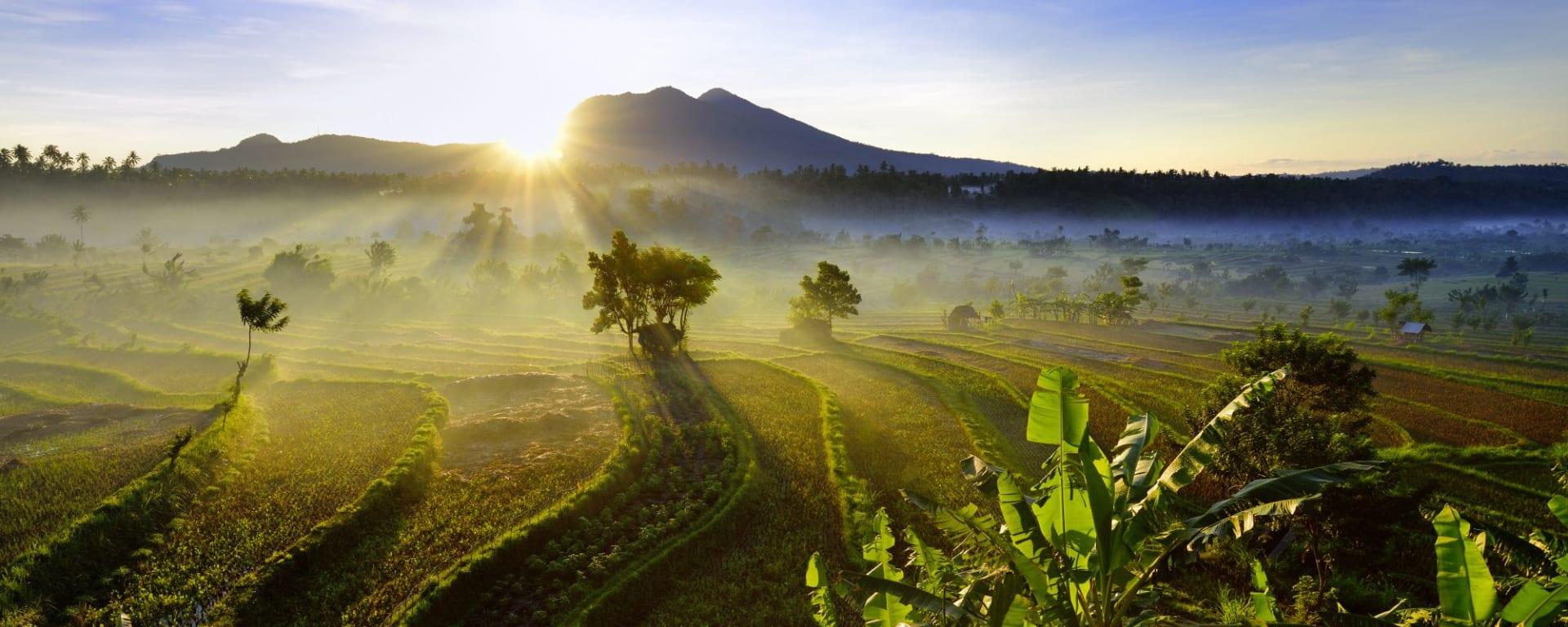Erlebnisreiches Bali ab Südbali: Bali rice fields East Bali