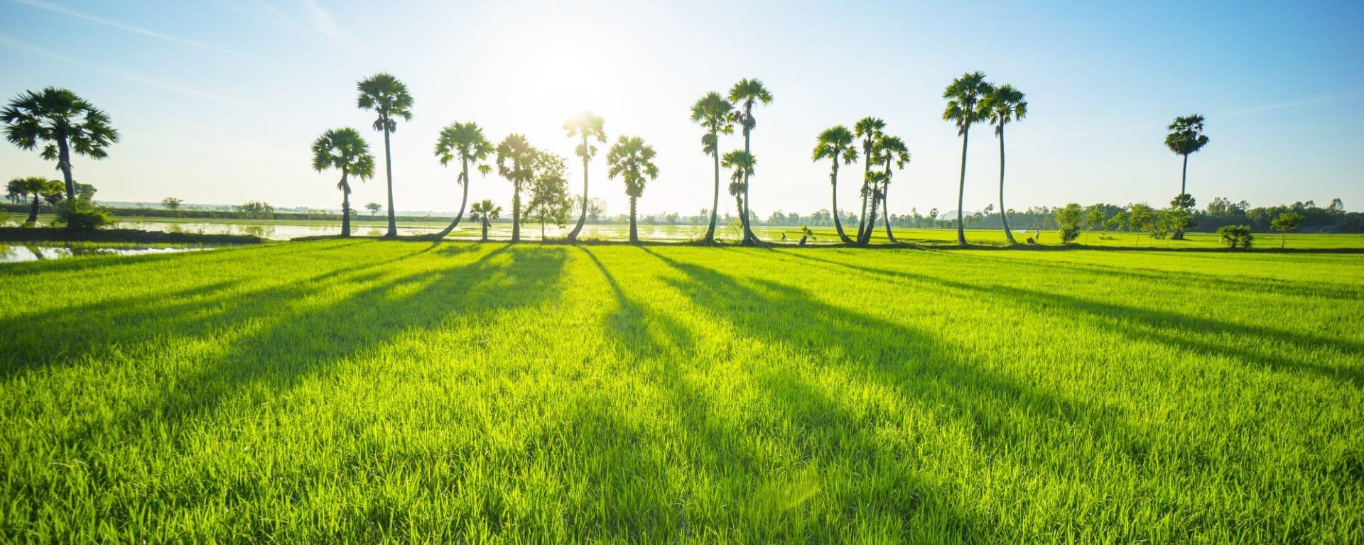 Le delta du Mékong – de Saigon à Phnom Penh: Mekong Delta: beautiful countryside