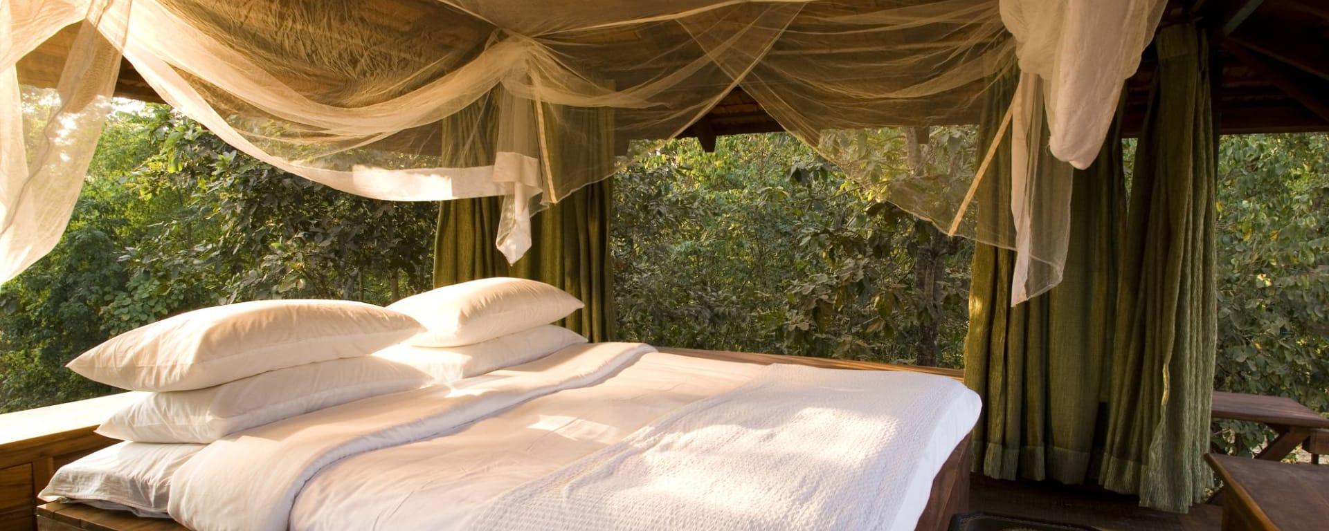 Baghvan Lodge in Pench: Suite | Rooftop Sleeping