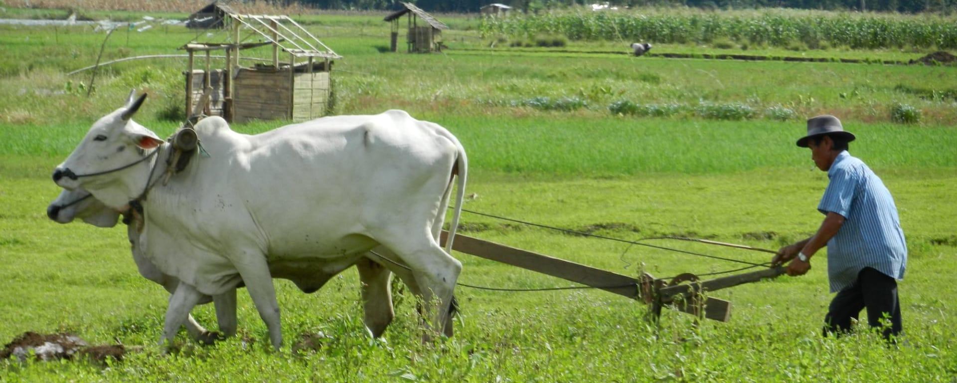 Im Hochland der Minahasa ab Manado: Sulawesi Minahasa farmer in the highlands