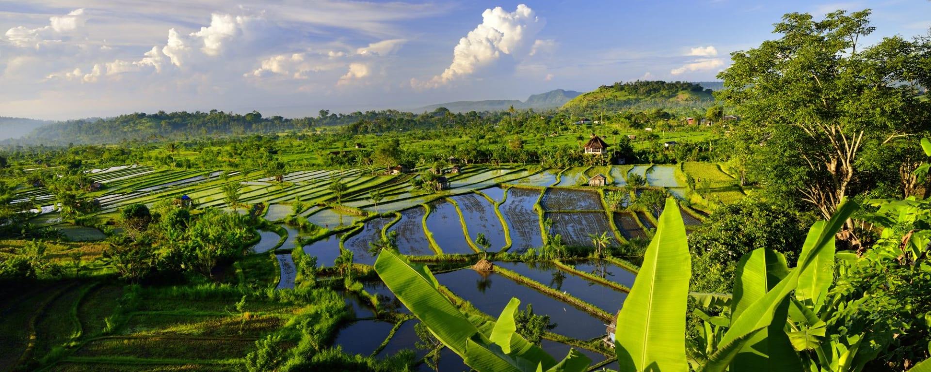 Wissenswertes zu Indonesien Reisen und Ferien: Bali rice fields East Bali