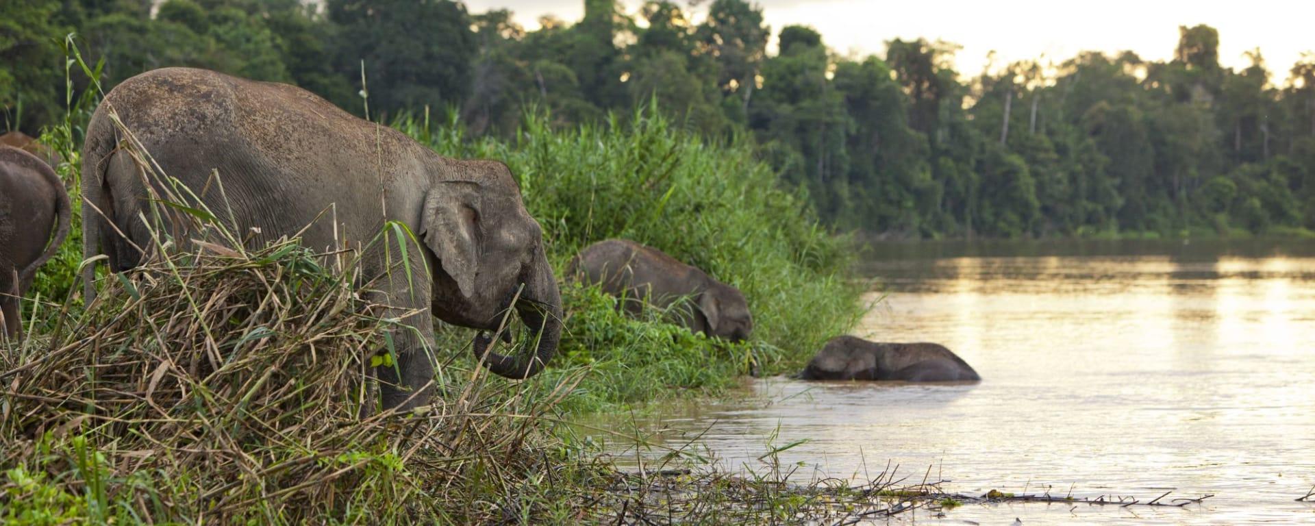 Vie sauvage de Bornéo / Borneo Rainforest Lodge de Kota Kinabalu: Kinabatangang River