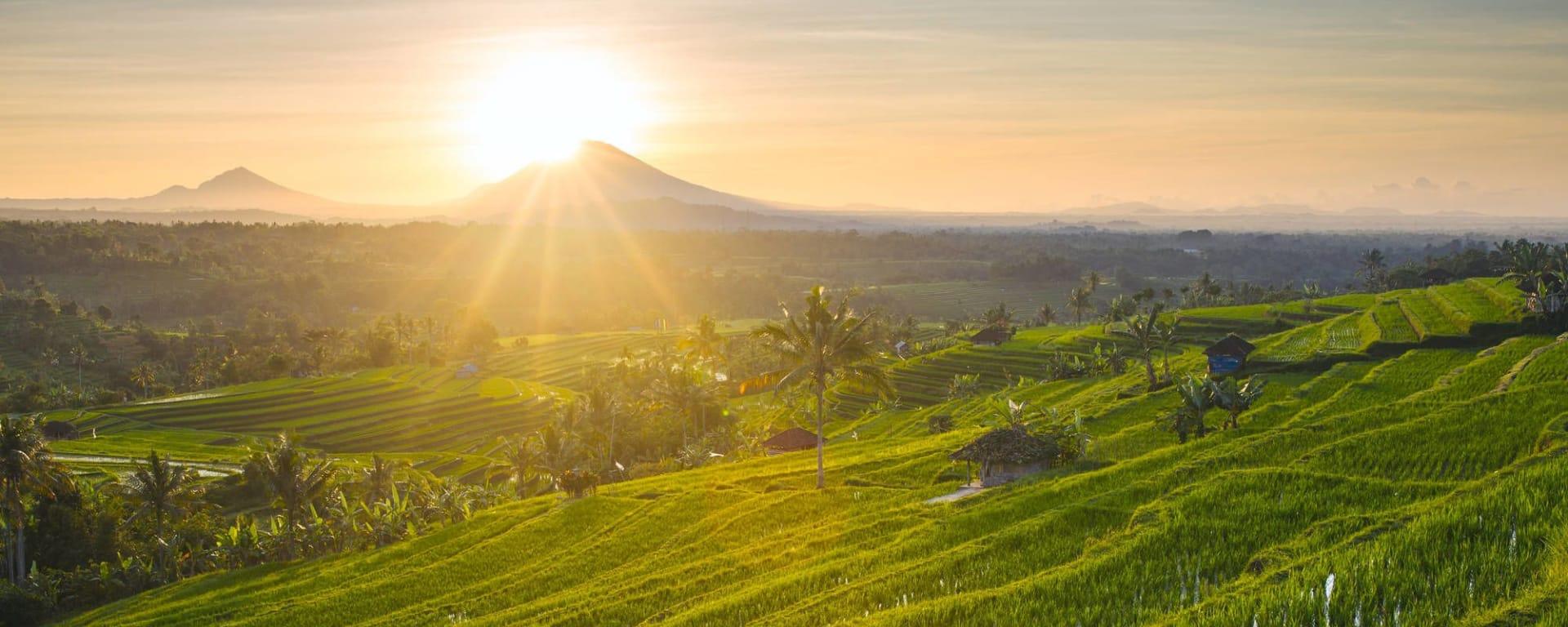 Découverte active de Bali de Sud de Bali: Bali Jatiluwih Rice Terraces