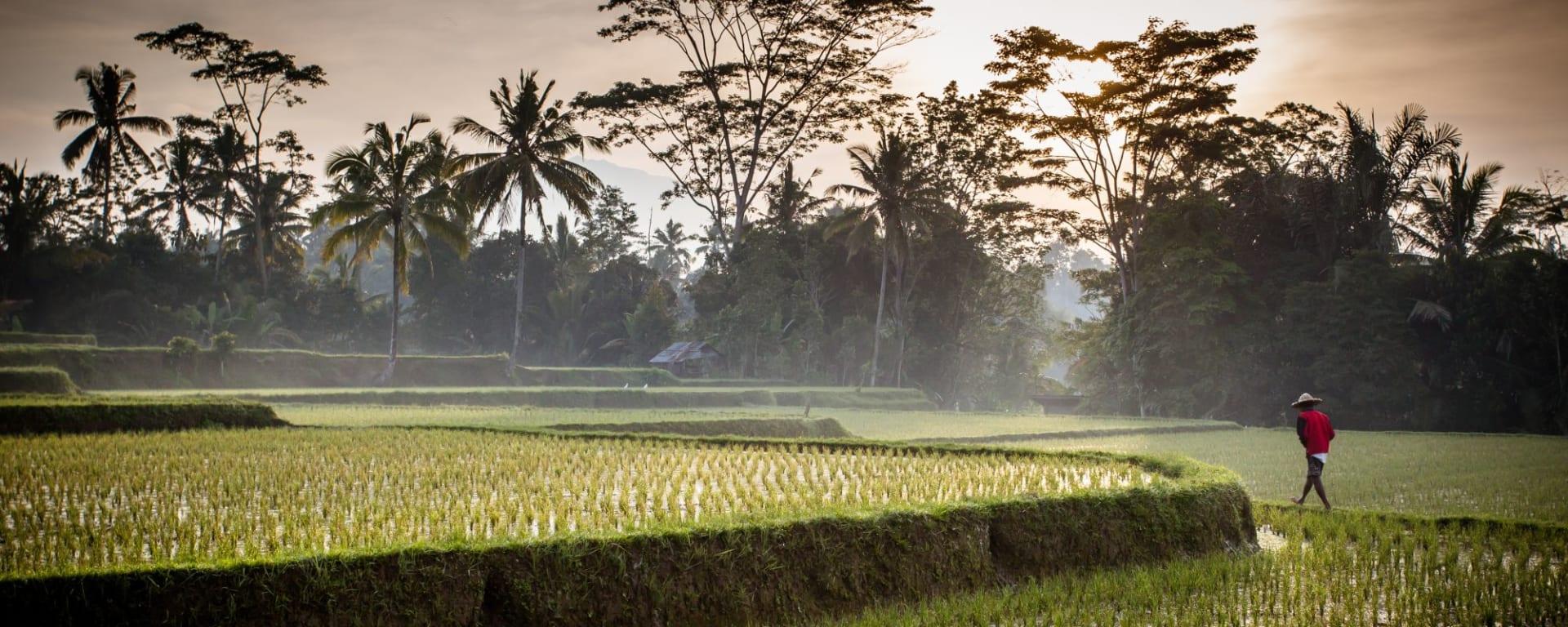 Bali compacte de Sud de Bali: Bali Ubud Rice field