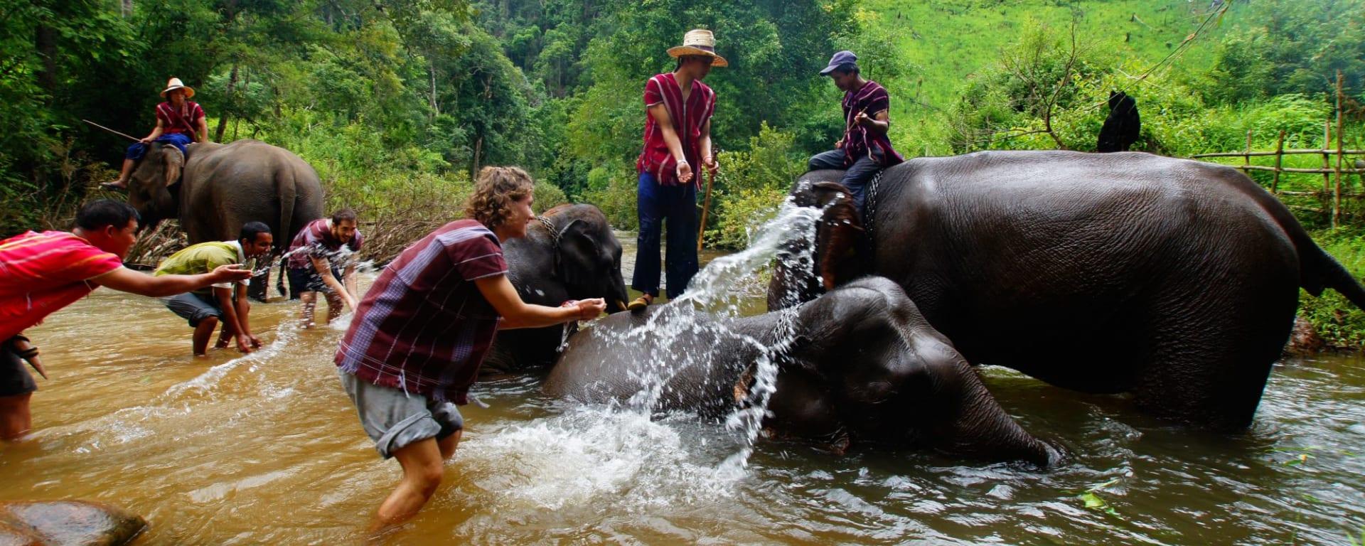 Le monde caché des tribus montagnardes de Chiang Mai: Northern Thailand: Elephants being washed
