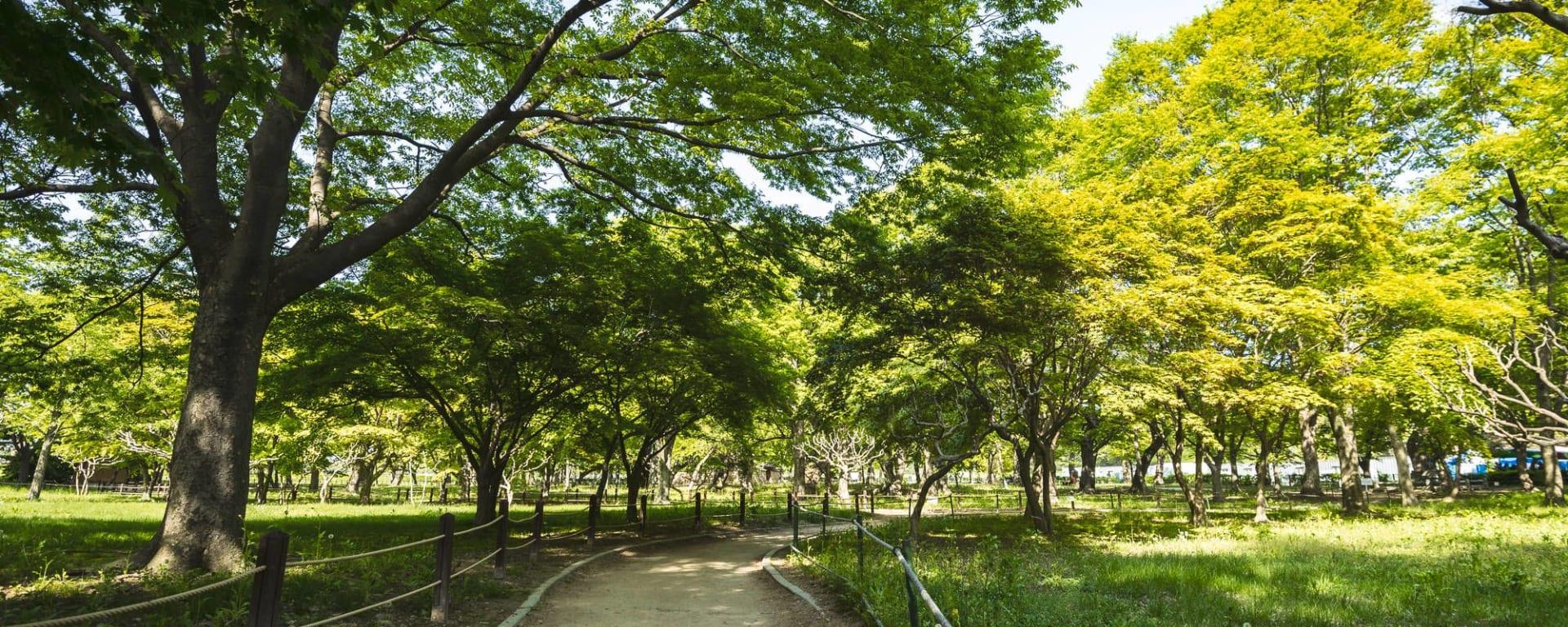 Découverte active de la Corée du Sud de Séoul: Gyeongju Gyerim forest