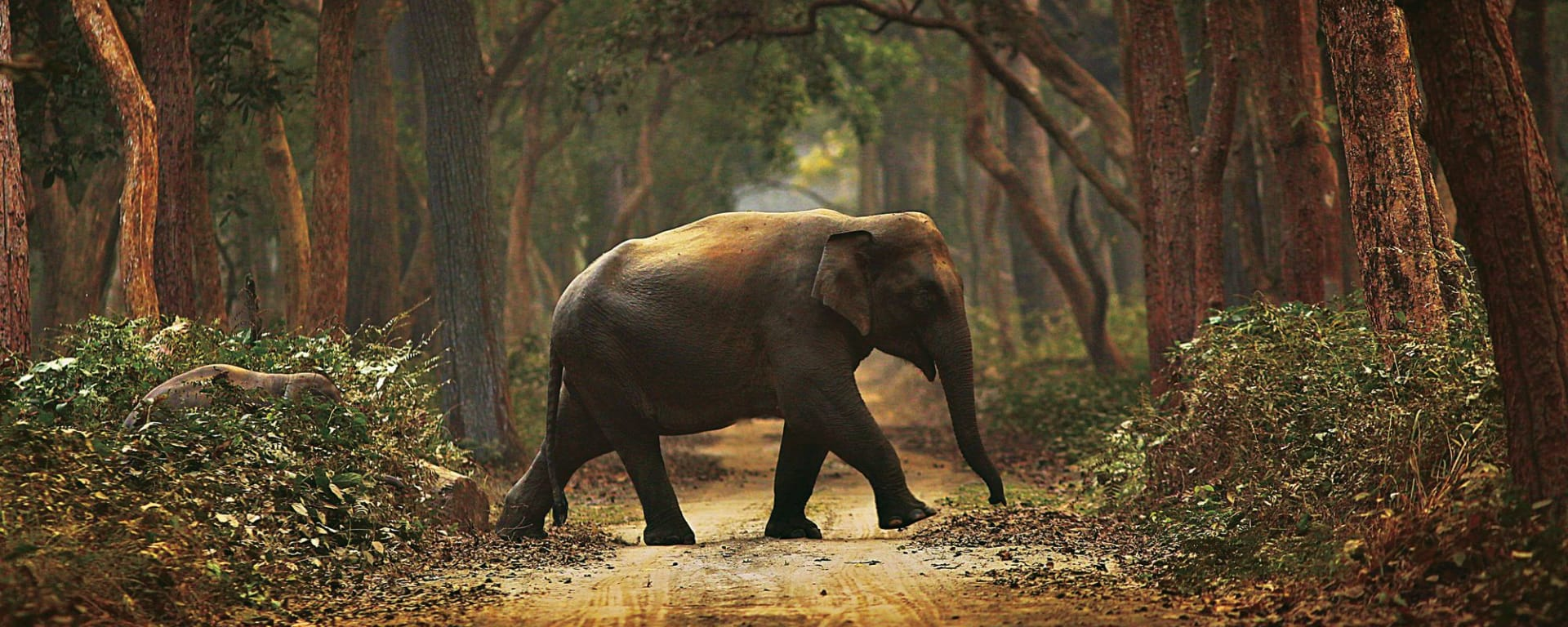 Jaagir Lodge Safari ab Lucknow: Elephant Trail