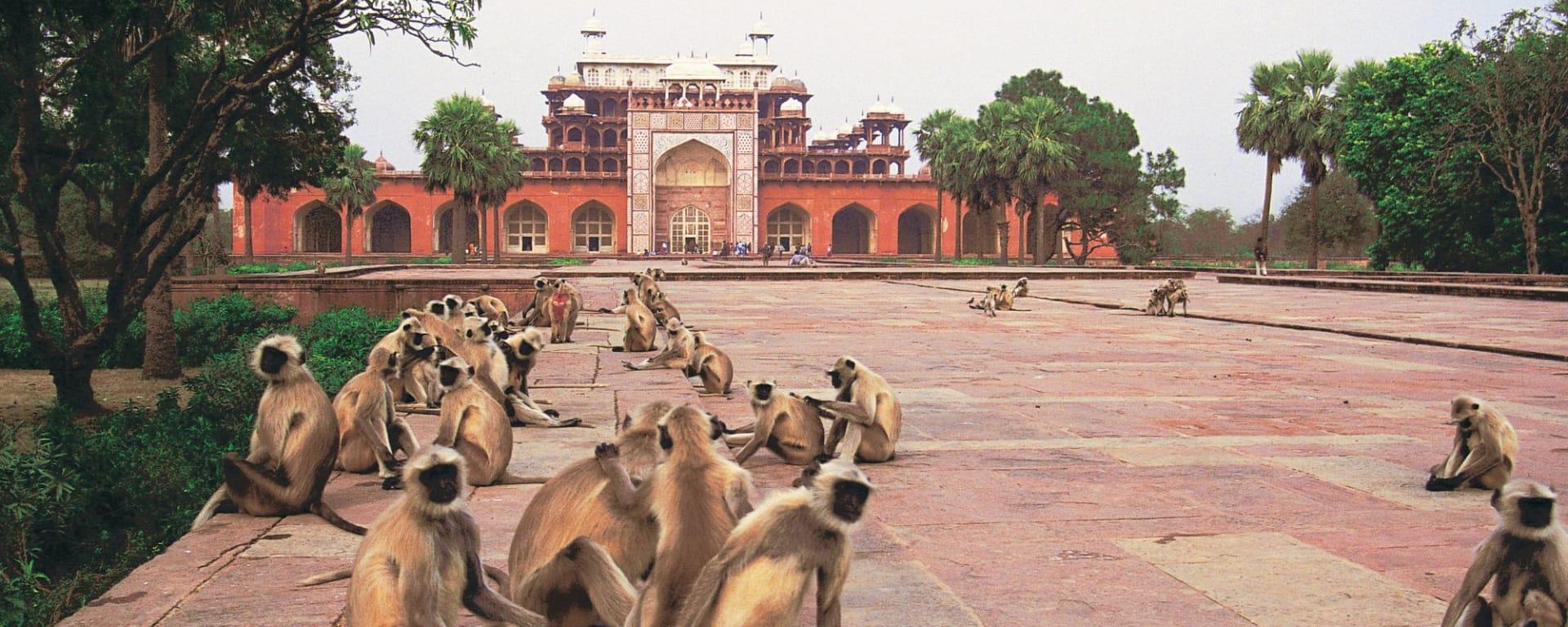 Goldenes Dreieck ab Delhi: Sikandra: Akbar's Tomb