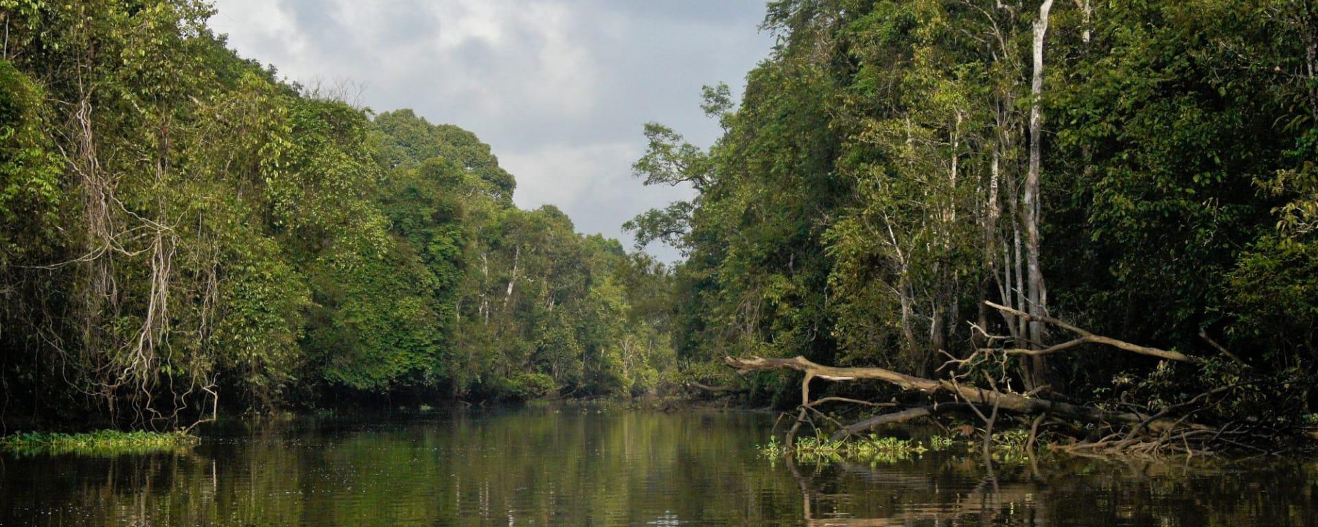 Borneo Wildlife / Tabin Wildlife Reserve ab Kota Kinabalu: Kinabatangan River