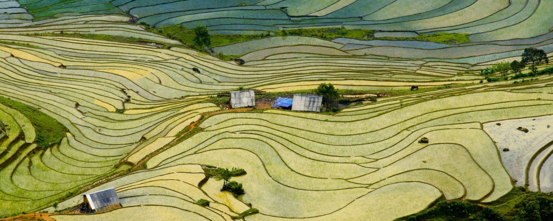 Abenteuer Sapa - Hiking & Biking Package ab Hanoi: Beautiful terraced rice field in Lao cai province