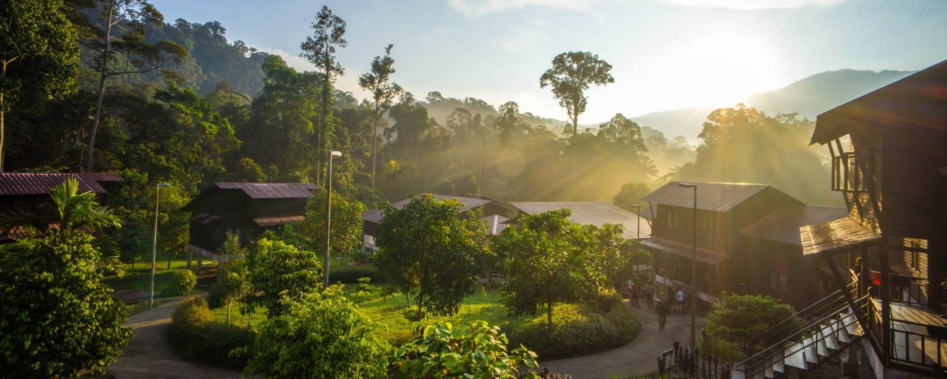 Malaisie authentique de Kuala Lumpur: Taman Negara in the morning