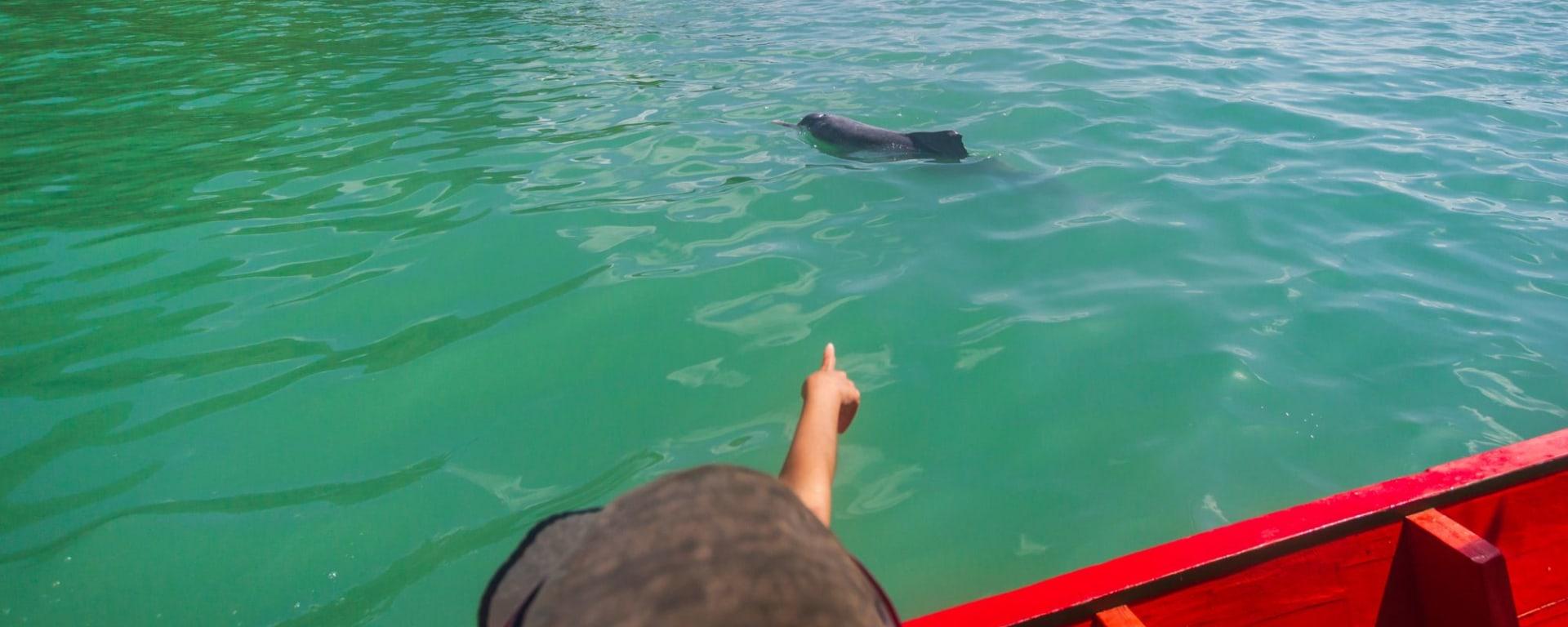 Von Küste zu Küste im Süden Thailands ab Krabi: Khanom villagers take tourists to watch dolphins