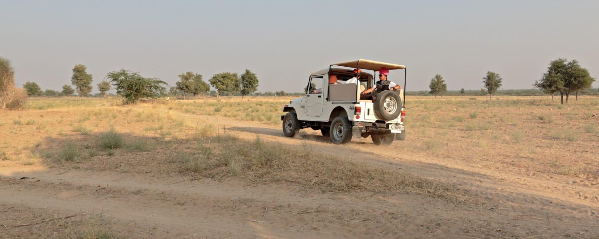 Romantisme des palais et magie du désert de Jodhpur: activities: Safari