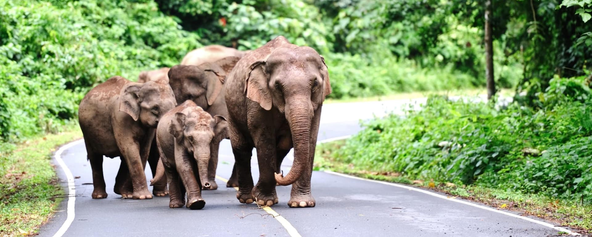 Nature & culture autour de Bangkok: Khao Yai National Park: wild elephants