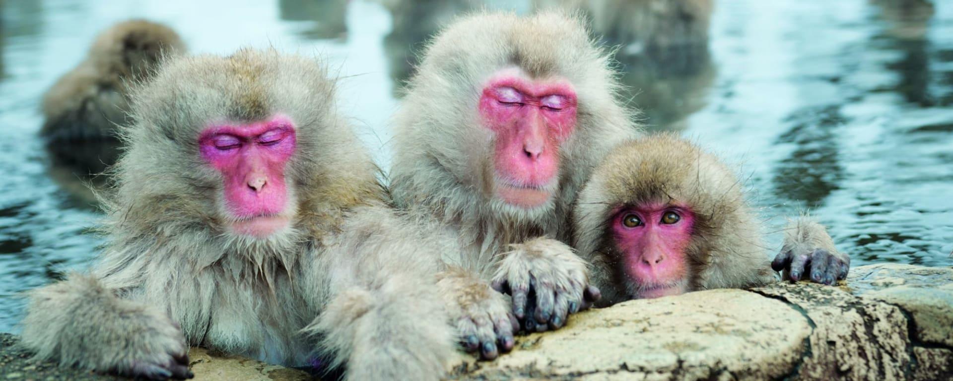 Au pays du soleil levant de Tokyo: Nagano: Snow Monkeys