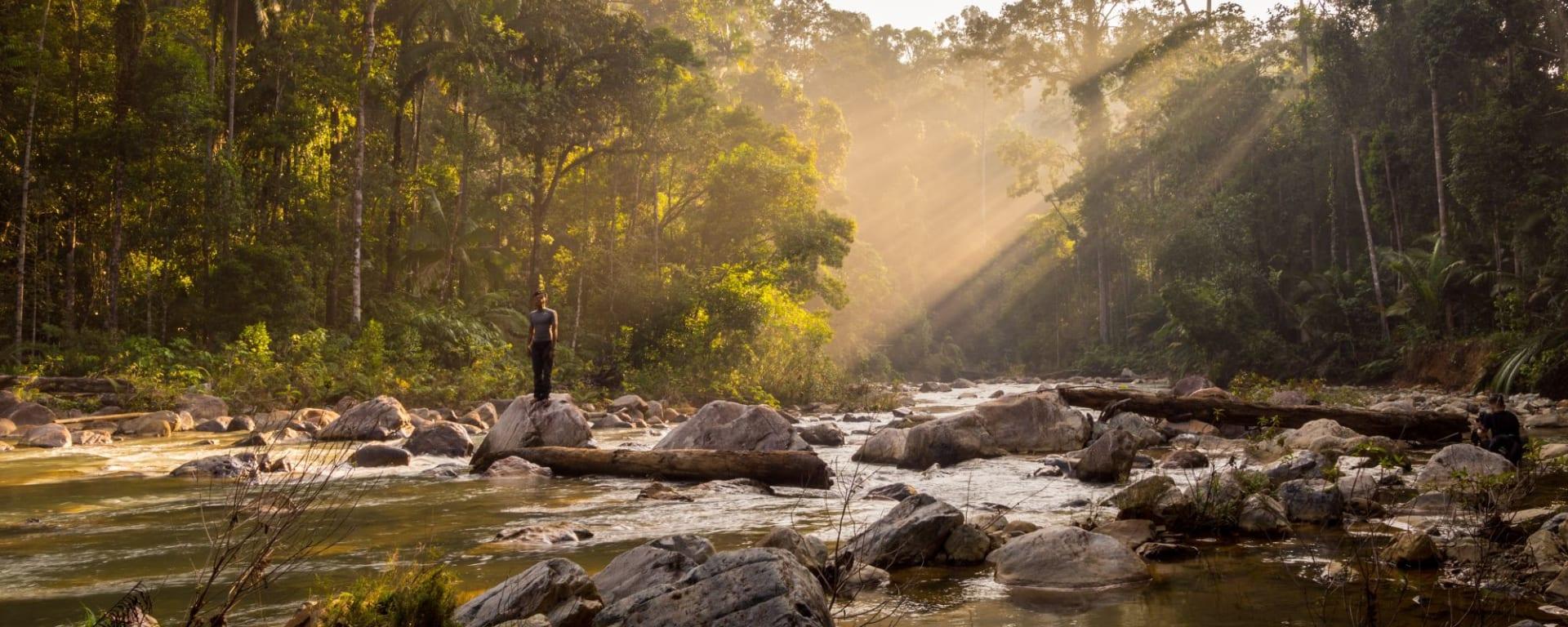 Taman Negara Nationalpark ab Kuala Lumpur: Taman Negara Morning