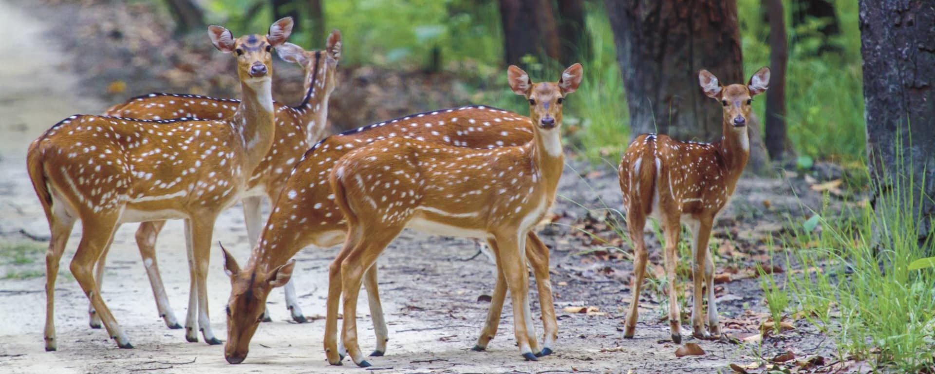 Jaagir Lodge Safari ab Lucknow: Deer