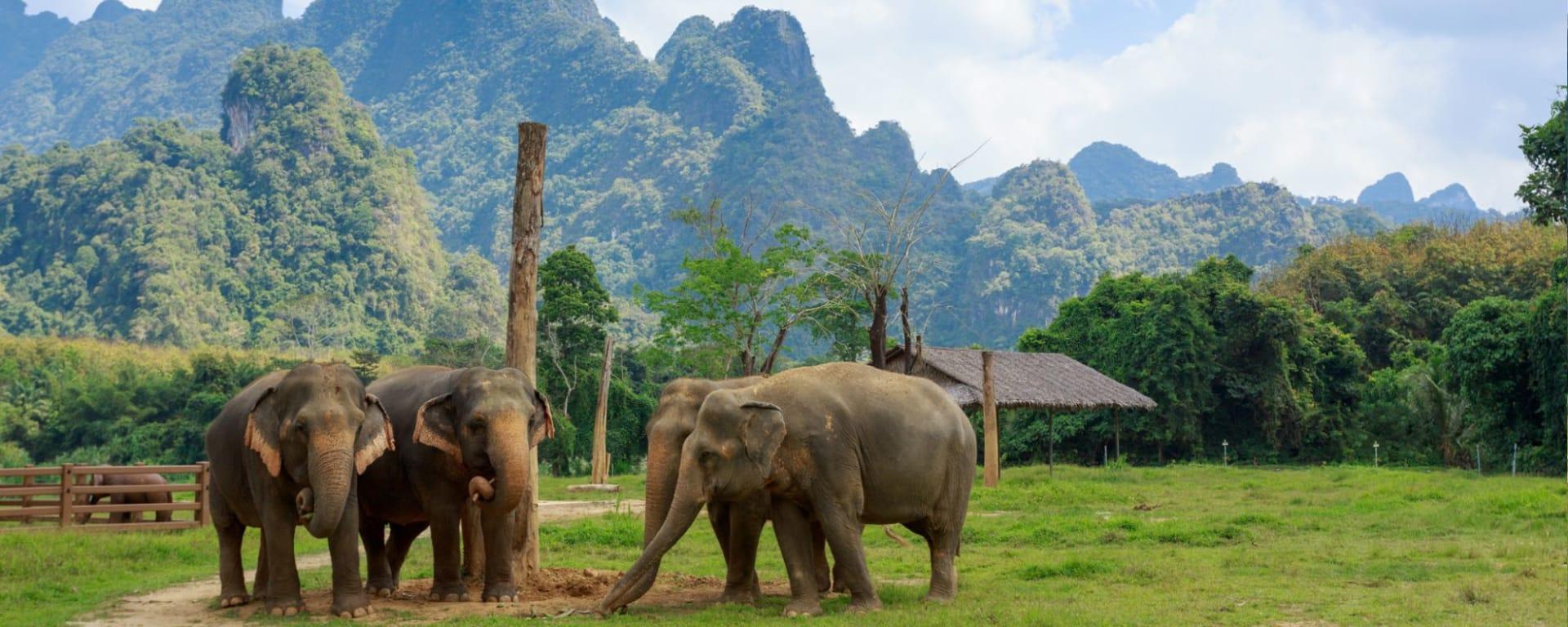 Elephant Hills - 3 jours de Phuket: Ethical Elephant Experience at Elephant Hills Luxury Tented Camp Khao Sok National Park Thailand - no Elephant Riding or Trekking