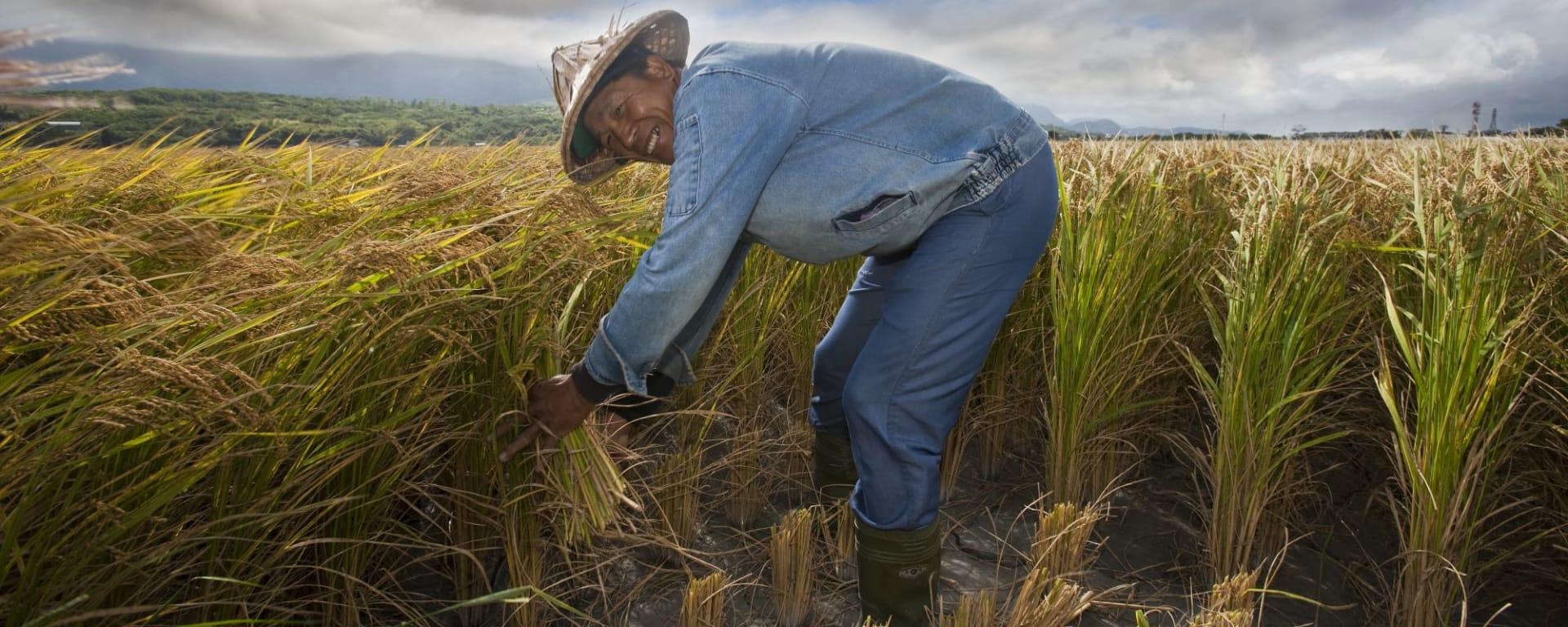 Voyages en Taïwan | Vacances en Asie par tourasia: Rice farmer on work