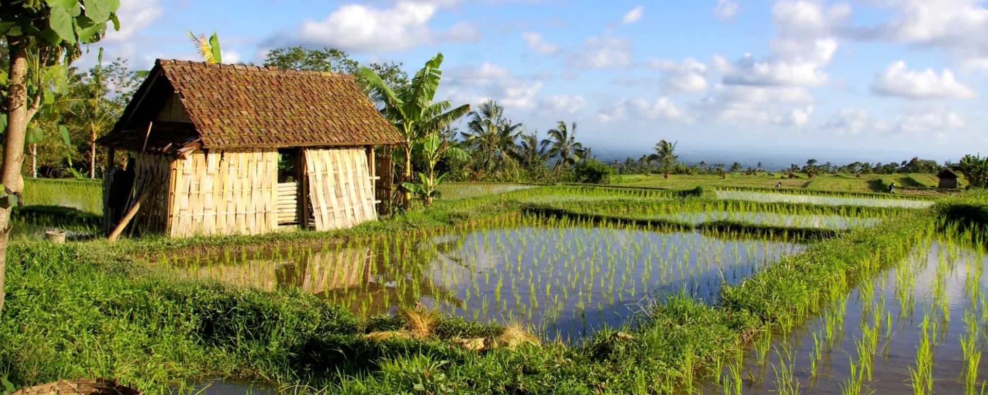 Bali de son propre chef - 1 journée à Sud de Bali: Bali Rice Fields