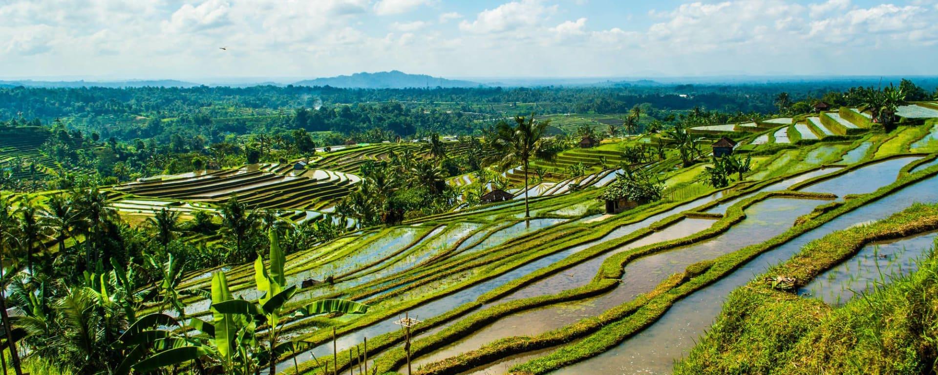 Ausflugtransfer Südbali - Nordbali: Bali Jatiluwih Rice terraces