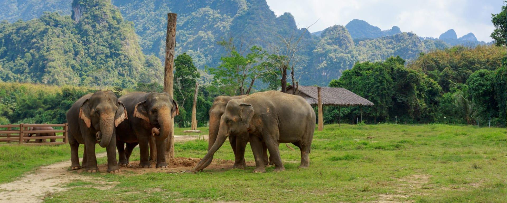 Elephant Hills - 3 Tage ab Phuket: Ethical Elephant Experience at Elephant Hills Luxury Tented Camp Khao Sok National Park Thailand - no Elephant Riding or Trekking