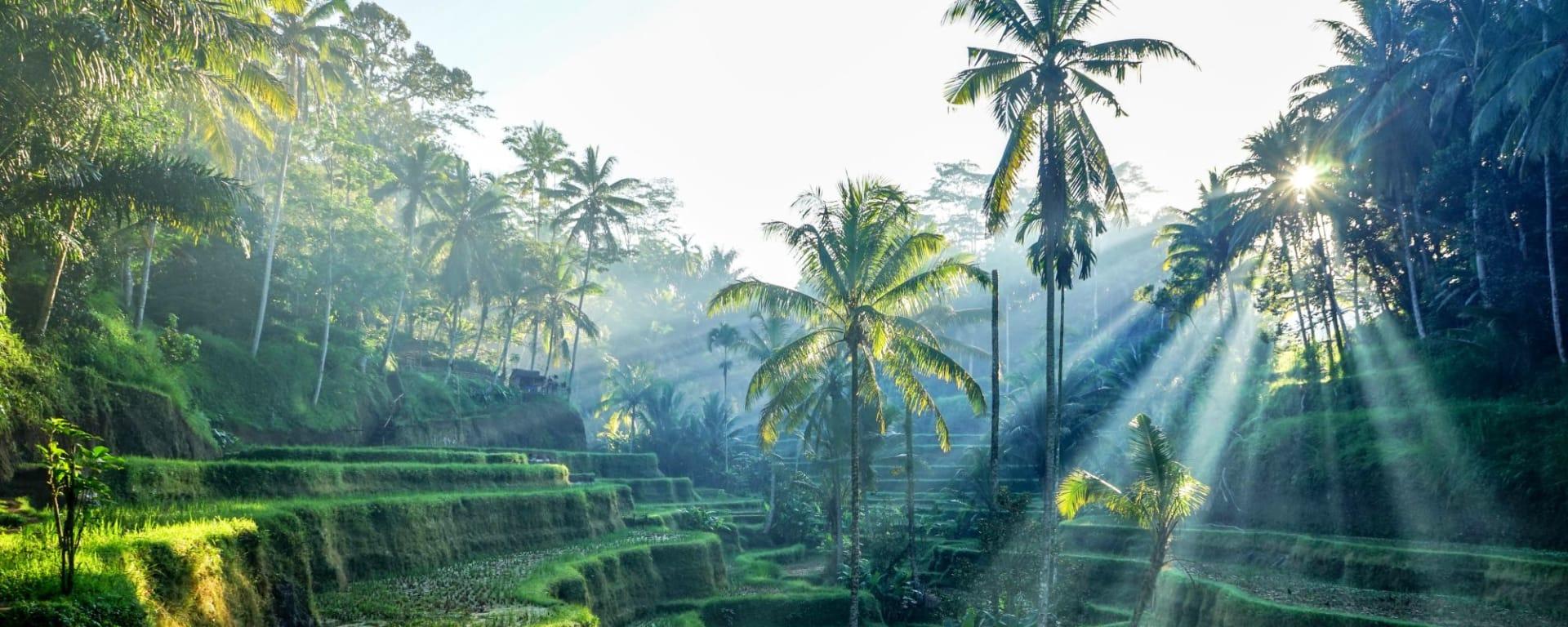 Les hauts lieux de Bali de Sud de Bali: Bali Ubud Rice Terraces