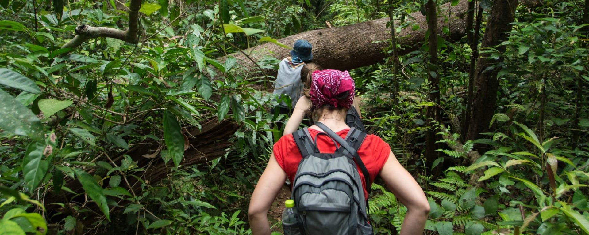Unbekannter I-San ab Bangkok: Khao Yai national park - Tourists hiking in the deep jungle