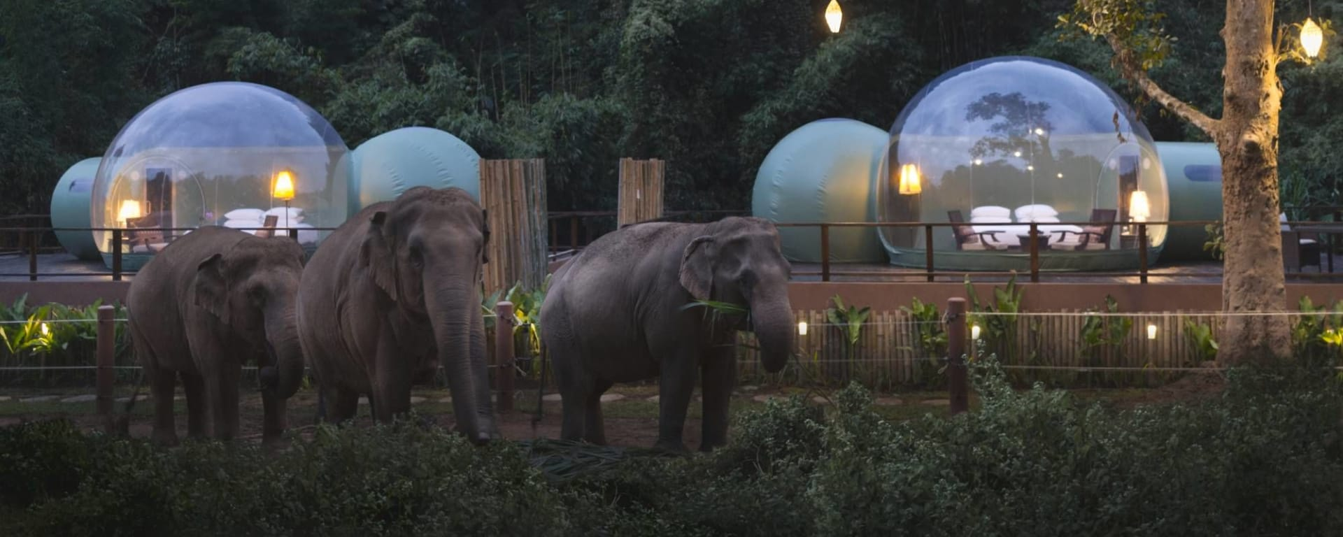 Anantara Golden Triangle Elephant Camp & Resort à Triangle d'Or: Jungle Bubbles at Dawn