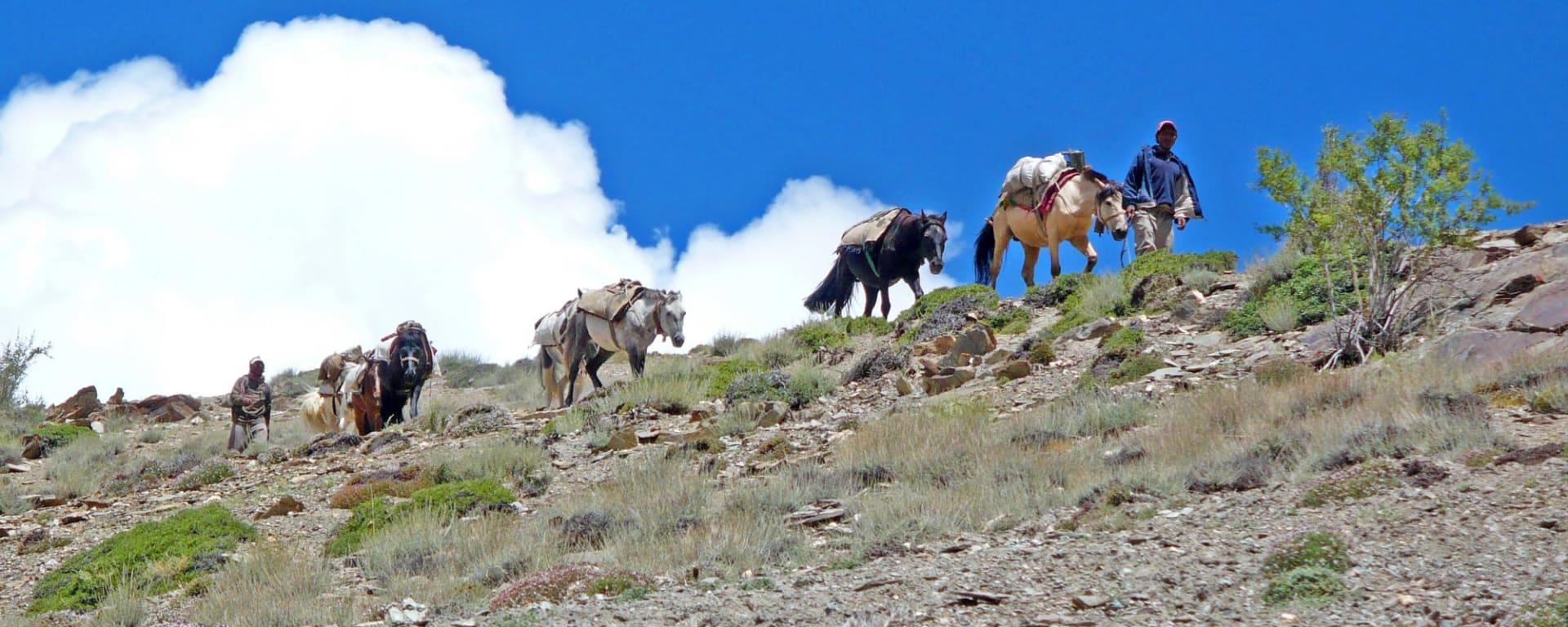 Les montagnes spectaculaires de Ladakh de Leh: Ladakh: two men with horses