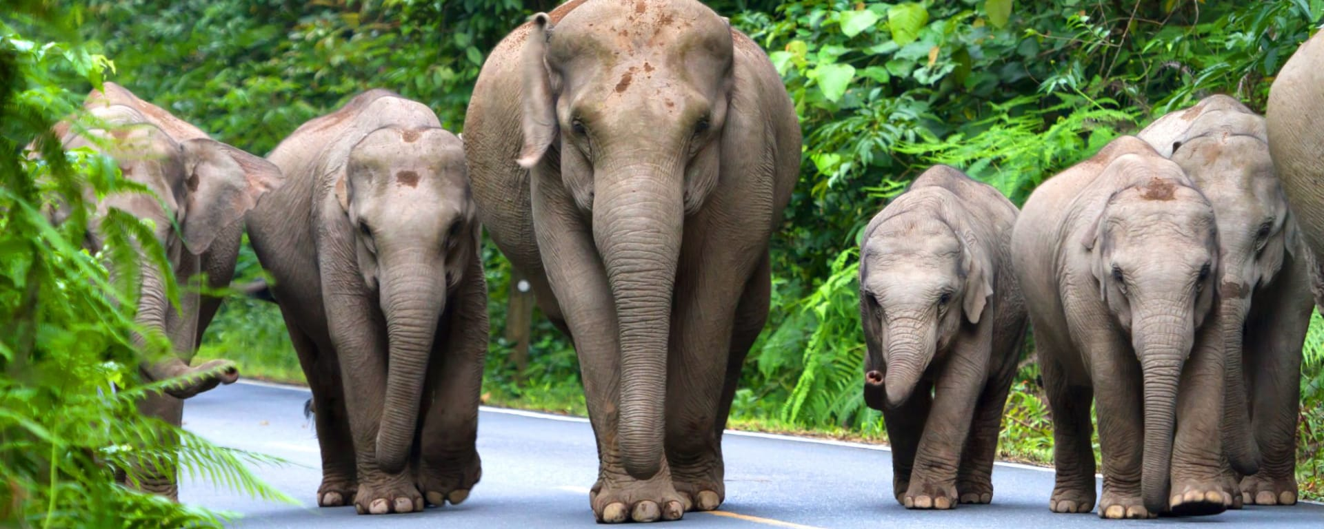 I-San – le trésor caché de la Thaïlande de Bangkok: Khao Yai National Park: Wild elephants