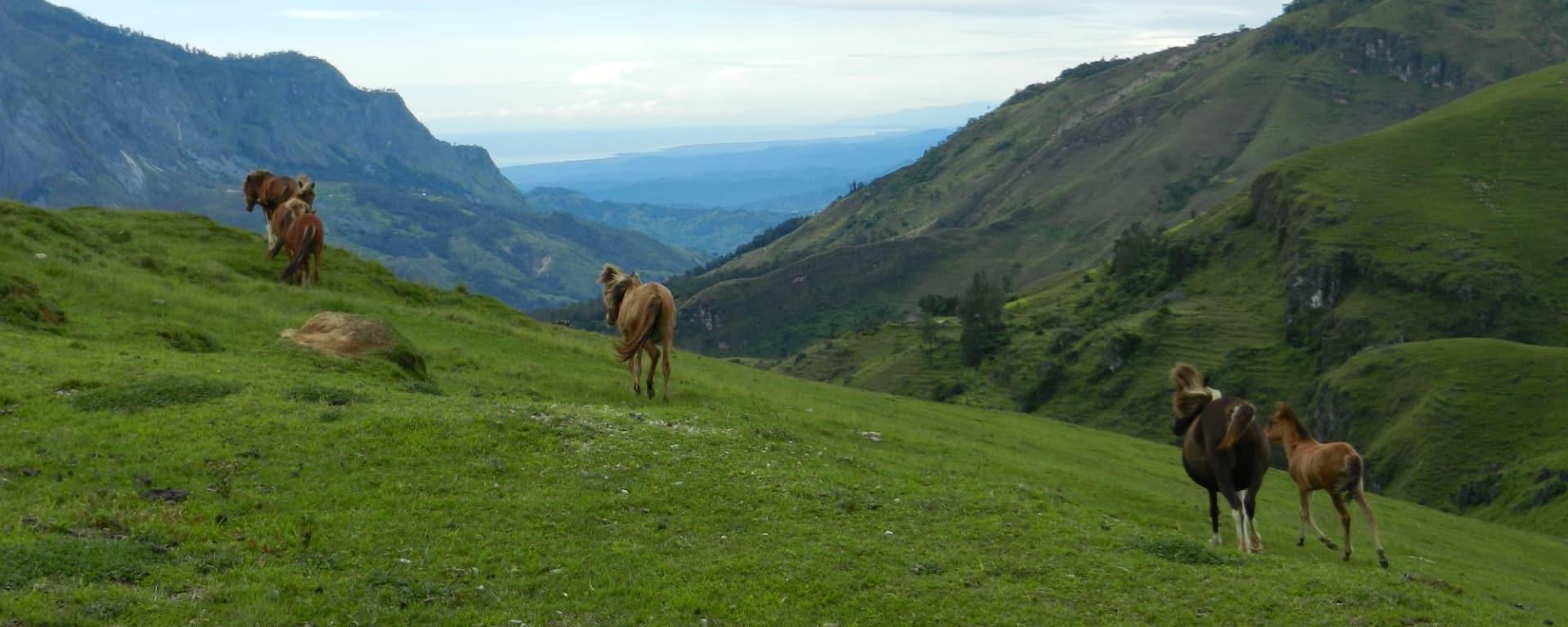 Unbekanntes Paradies Timor-Leste ab Dili: Maubisse: Hilltop view to south coast