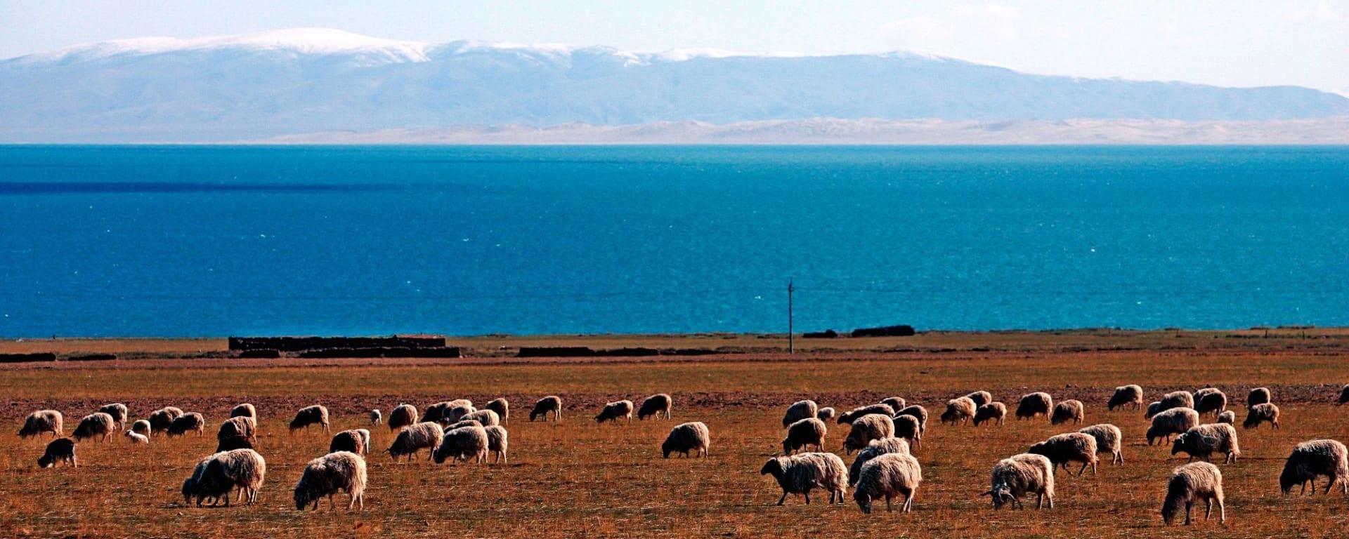 Die Magie des Tibets - Basis & Tsetang Verlängerung ab Lhasa: Tibetetan landscape with lake, mountains and sheeps