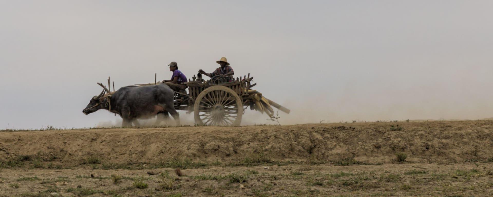 Ursprüngliches Dorfleben am Dohtawaddy Fluss in Mandalay: Bullock Cart