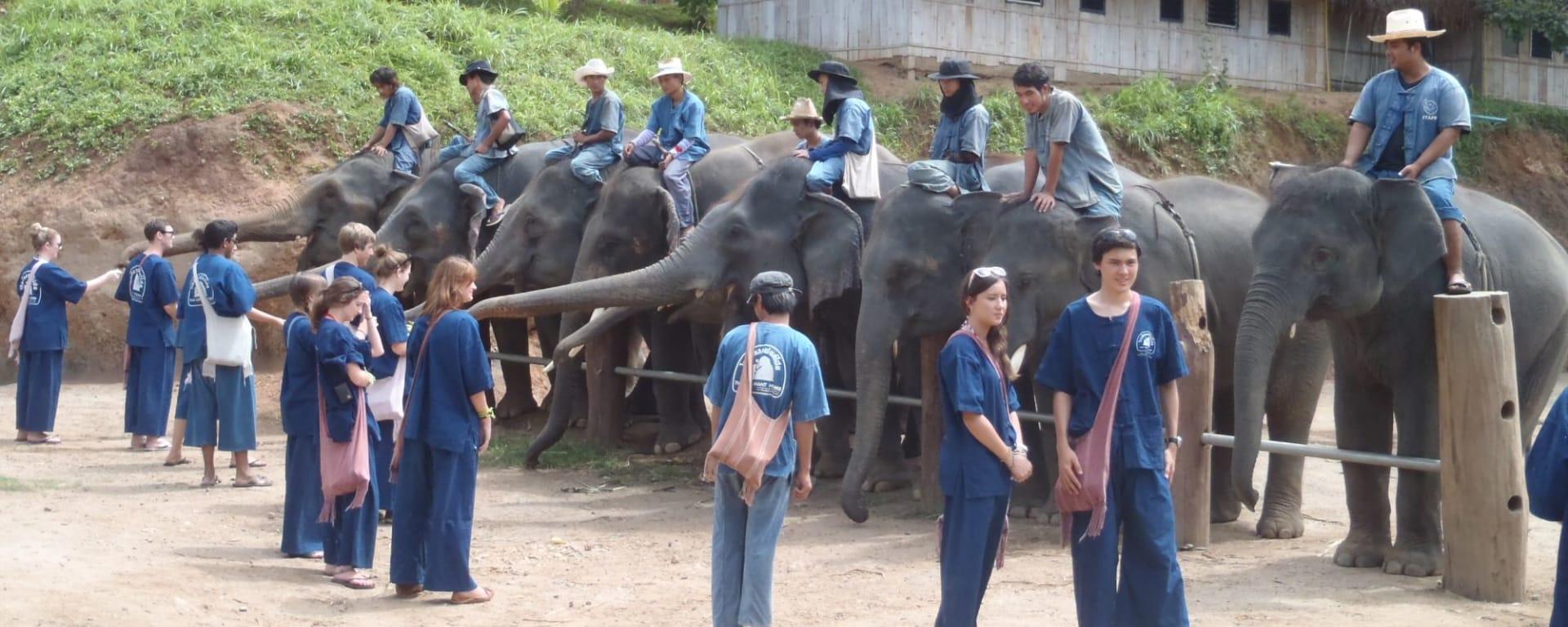 Mahout d'un jour à Chiang Mai: Thai Elephant Home