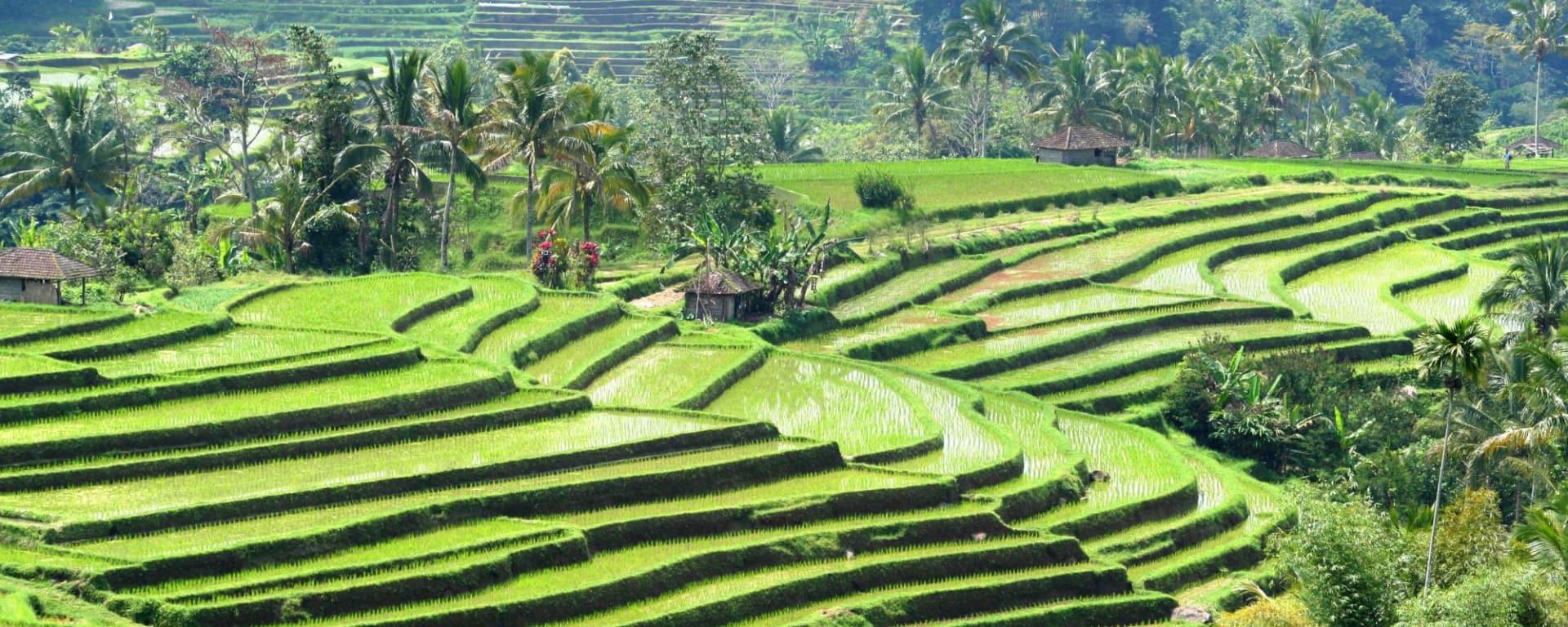 Mount Batur - Kontrastreiches Bali in Südbali: Bali Rice Terraces