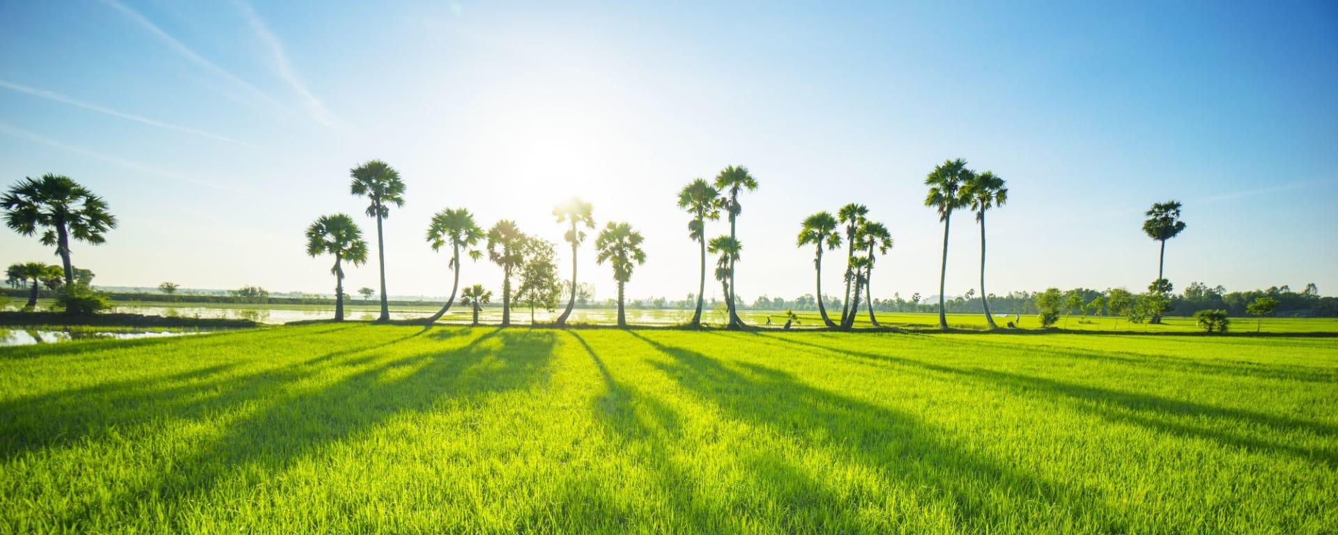 Le delta du Mékong - de/à Saigon: Mekong Delta: beautiful countryside