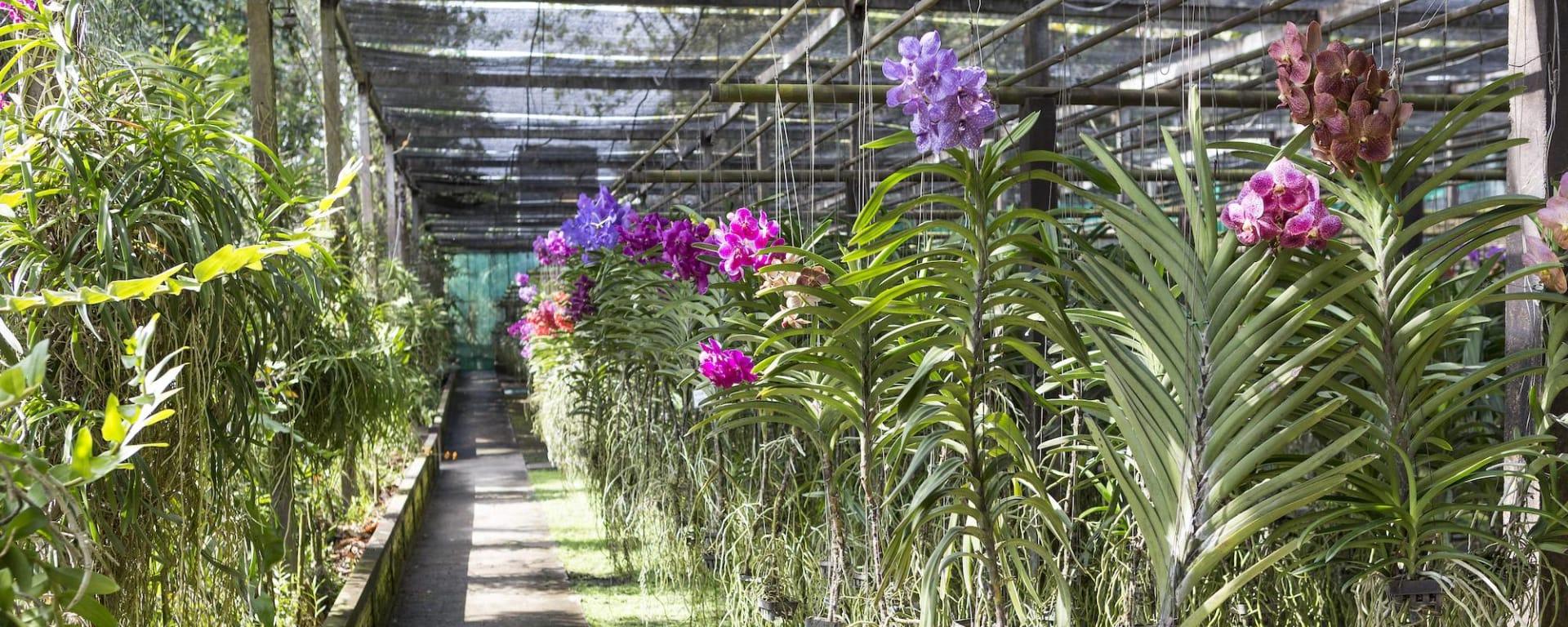 Tribus montagnardes & orchidées à Chiang Mai: Orchid Farm