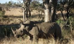 Safari South African Style!