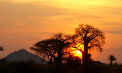 East Africa The Home Of Safaris