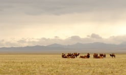 Hidden gems of Mongolia that are on your Must Do list
