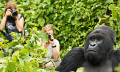 Things You Should Know Before Going Gorilla Trekking!