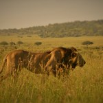 A Trip to Kidepo Valley