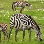 East Africa Tours with African Paradise Safaris